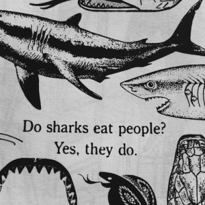 do sharks eat people