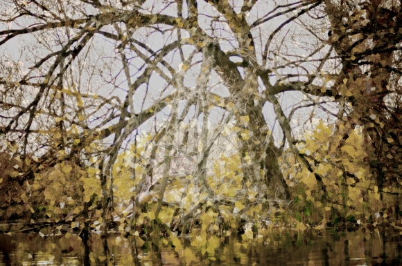 anneliese gallery - surreal leaning tree