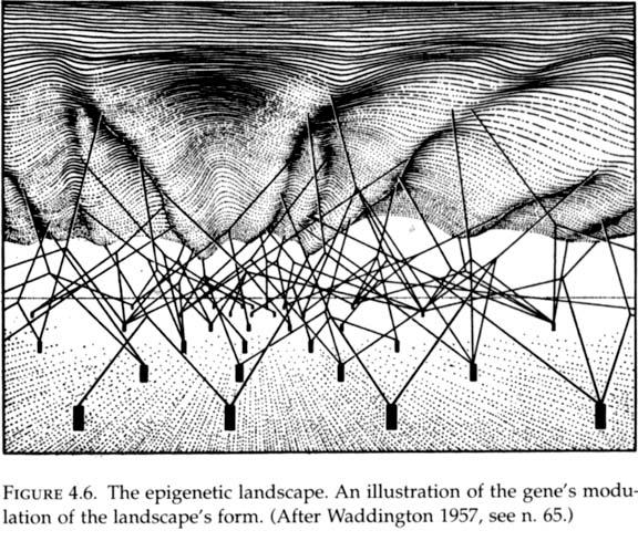 Strategy of the Genes - Conrad Hal Waddington
